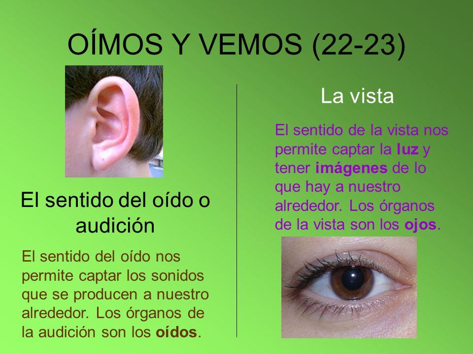 El sentido del oído o audición