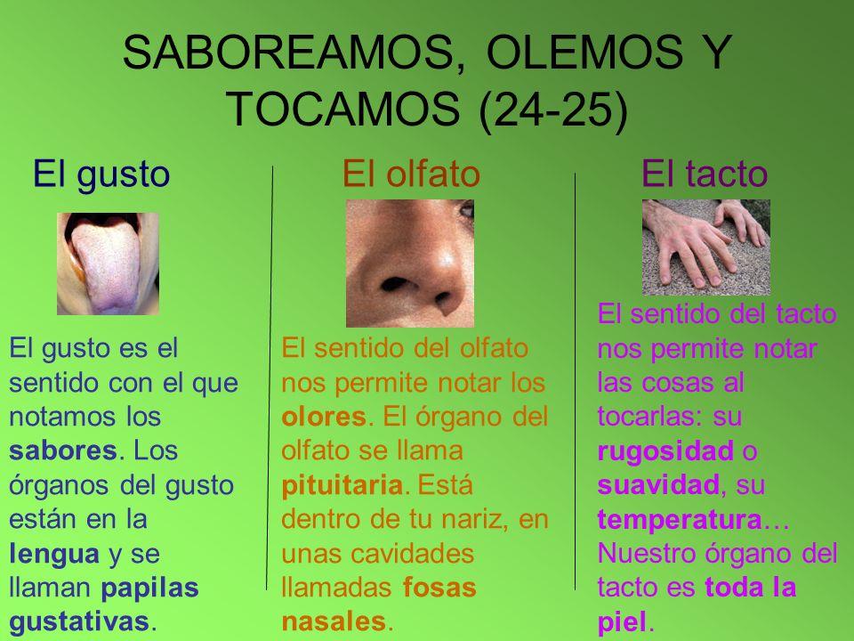 SABOREAMOS, OLEMOS Y TOCAMOS (24-25)