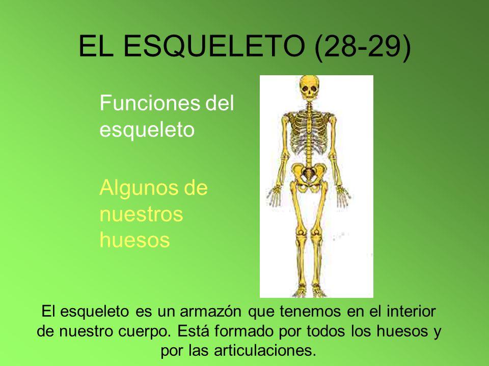 EL ESQUELETO (28-29) Funciones del esqueleto