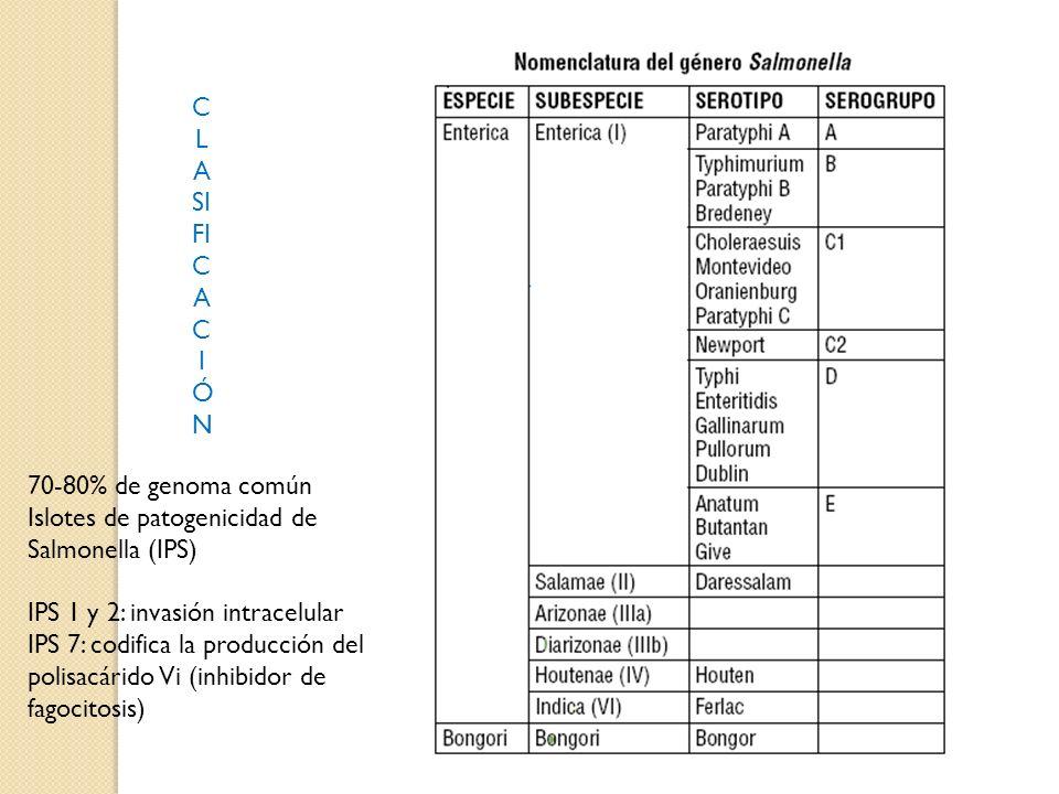 CLASIFICACIÓN 70-80% de genoma común. Islotes de patogenicidad de Salmonella (IPS) IPS 1 y 2: invasión intracelular.