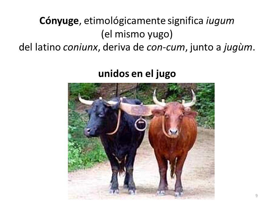 Cónyuge, etimológicamente significa iugum (el mismo yugo) del latino coniunx, deriva de con-cum, junto a jugùm.