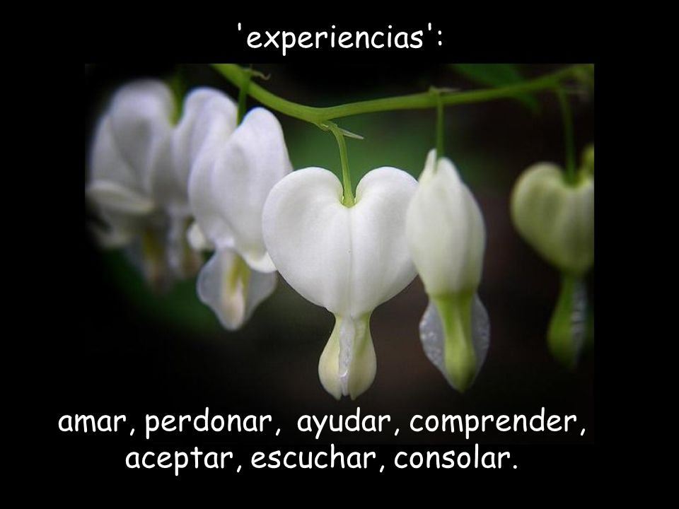 amar, perdonar, ayudar, comprender, aceptar, escuchar, consolar.