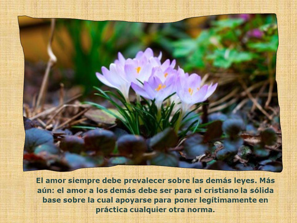 El amor siempre debe prevalecer sobre las demás leyes