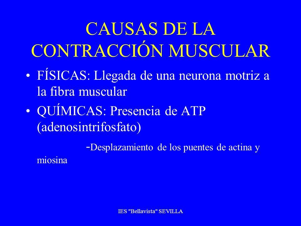 CAUSAS DE LA CONTRACCIÓN MUSCULAR