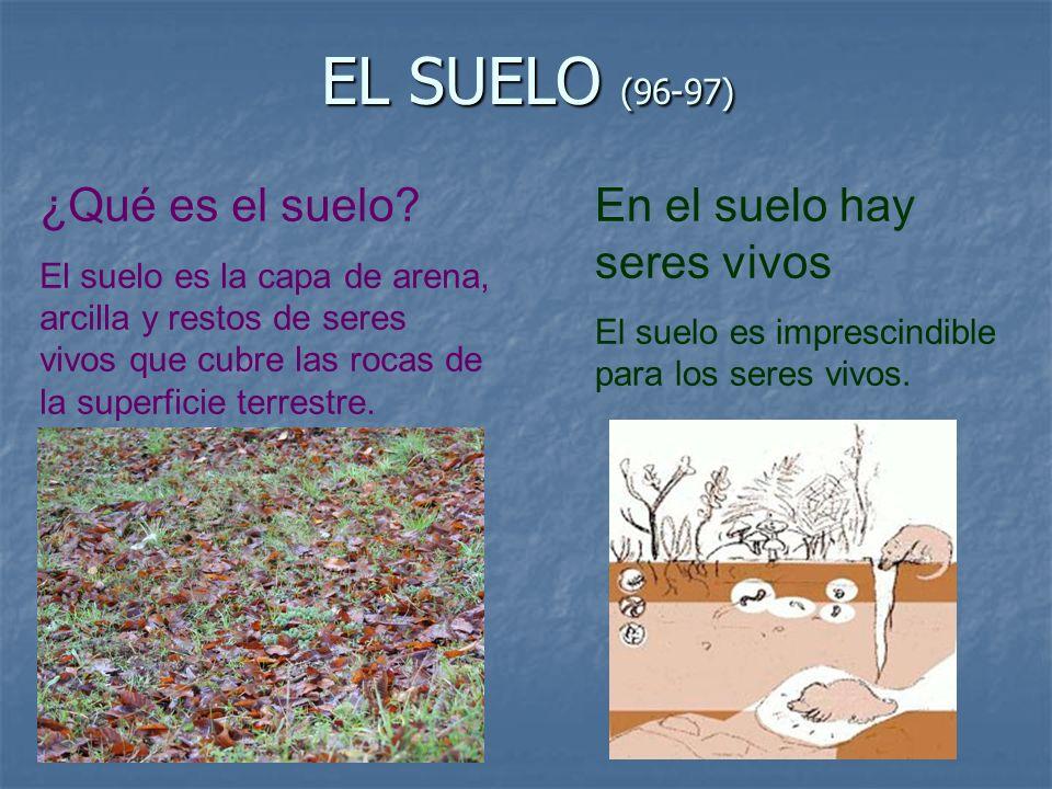 EL SUELO (96-97) ¿Qué es el suelo En el suelo hay seres vivos