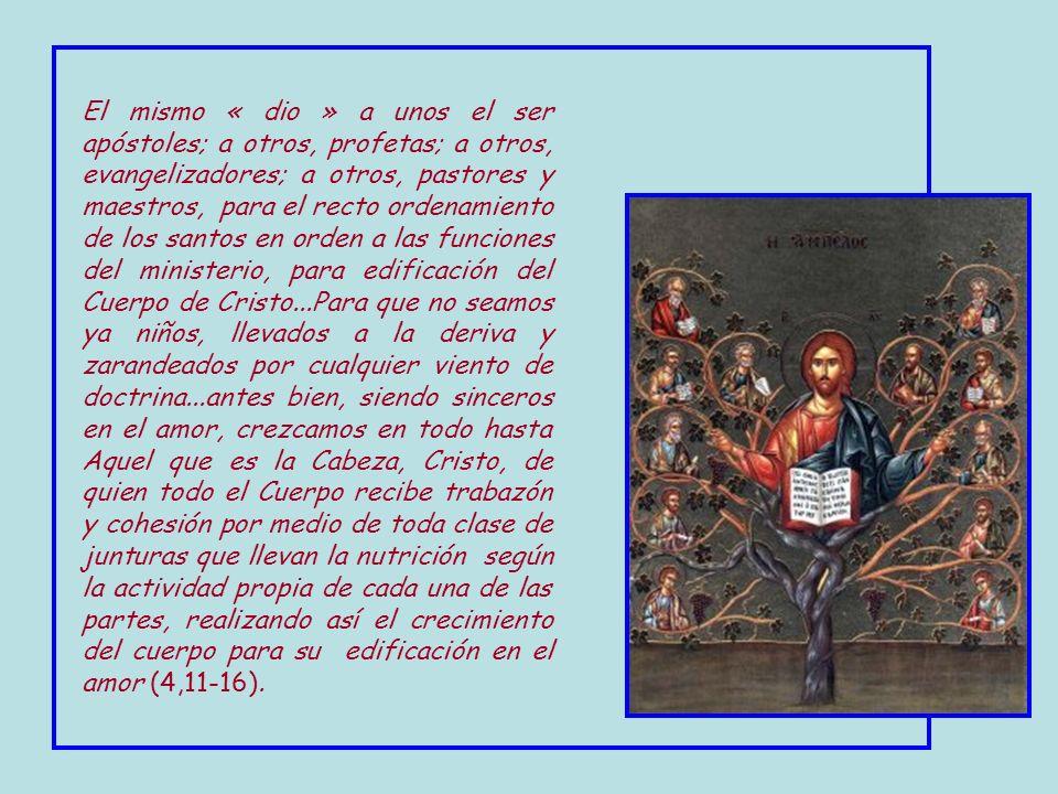 El mismo « dio » a unos el ser apóstoles; a otros, profetas; a otros, evangelizadores; a otros, pastores y maestros, para el recto ordenamiento de los santos en orden a las funciones del ministerio, para edificación del Cuerpo de Cristo...Para que no seamos ya niños, llevados a la deriva y zarandeados por cualquier viento de doctrina...antes bien, siendo sinceros en el amor, crezcamos en todo hasta Aquel que es la Cabeza, Cristo, de quien todo el Cuerpo recibe trabazón y cohesión por medio de toda clase de junturas que llevan la nutrición según la actividad propia de cada una de las partes, realizando así el crecimiento del cuerpo para su edificación en el amor (4,11-16).
