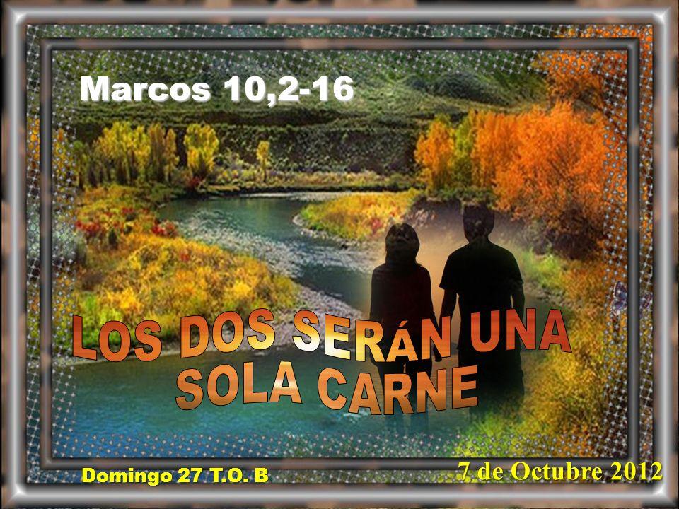LOS DOS SERÁN UNA SOLA CARNE Marcos 10,2-16 7 de Octubre 2012
