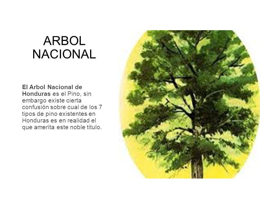 Simbolos patrios de centroamerica ppt video online descargar for Tipos de arboles y caracteristicas