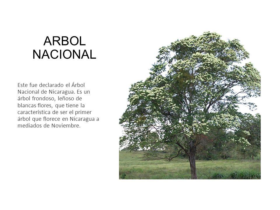 ARBOL NACIONAL