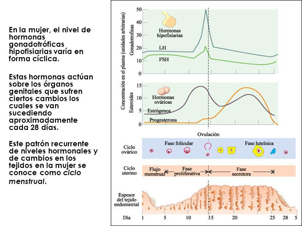 En la mujer, el nivel de hormonas gonadotróficas hipofisiarias varía en forma cíclica.