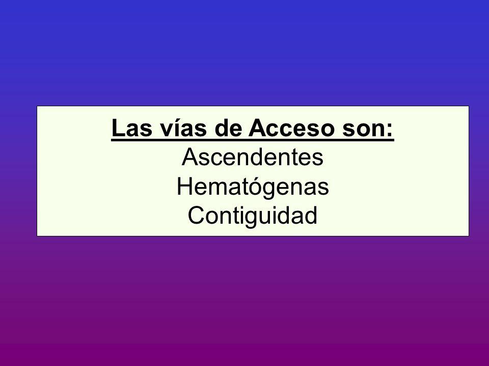 Las vías de Acceso son: Ascendentes Hematógenas Contiguidad