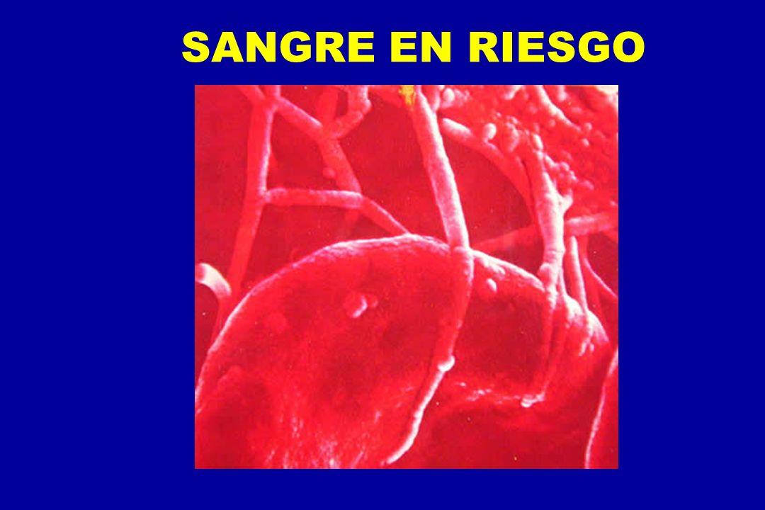 SANGRE EN RIESGO