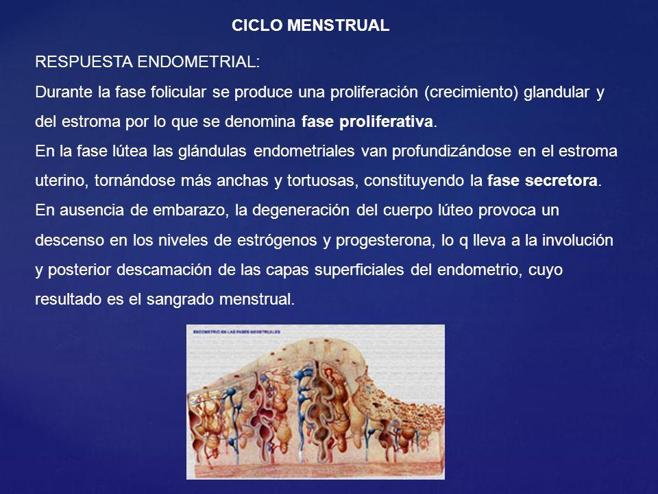 CICLO MENSTRUAL RESPUESTA ENDOMETRIAL: