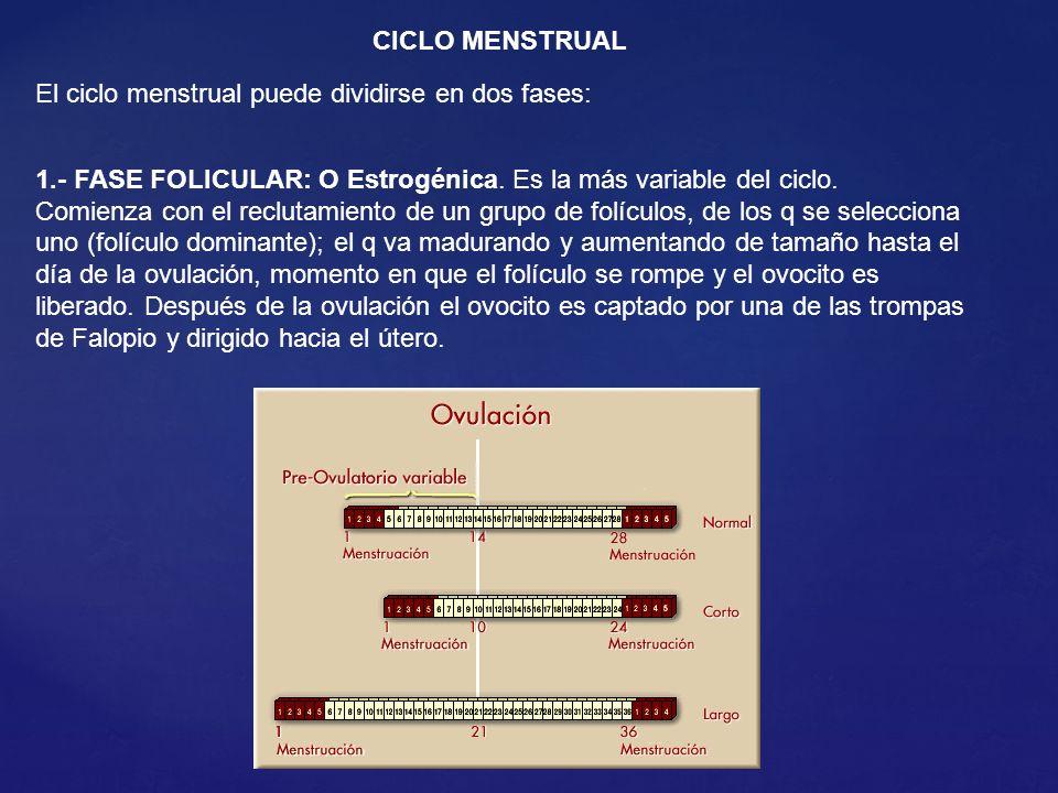 CICLO MENSTRUAL El ciclo menstrual puede dividirse en dos fases: 1.- FASE FOLICULAR: O Estrogénica. Es la más variable del ciclo.