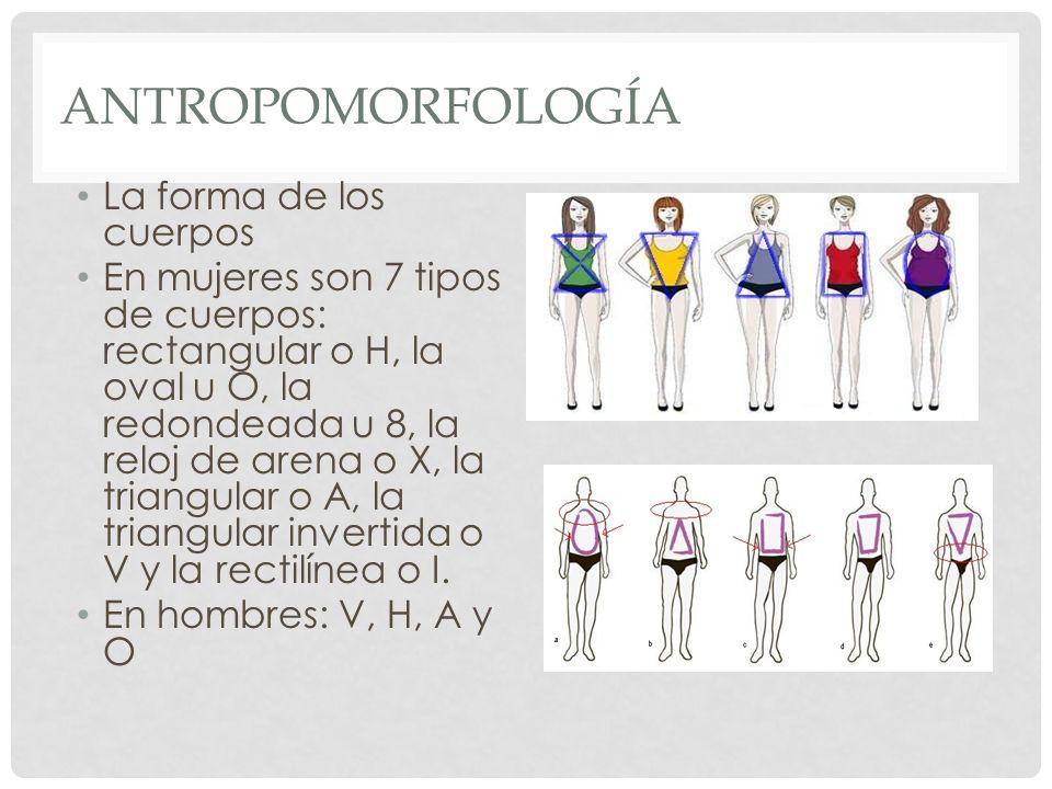 Antropomorfología La forma de los cuerpos