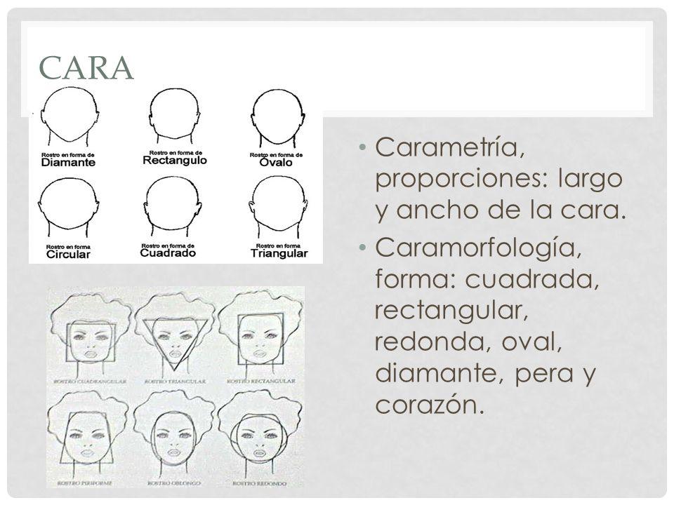 Cara Carametría, proporciones: largo y ancho de la cara.