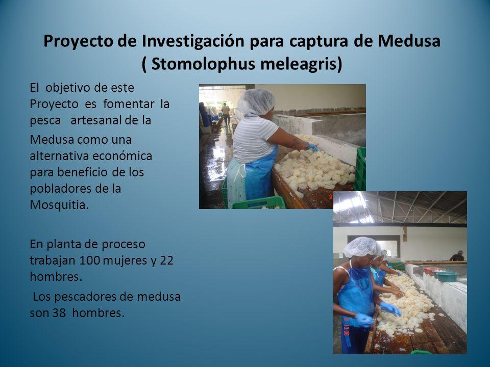 Proyecto de Investigación para captura de Medusa ( Stomolophus meleagris)