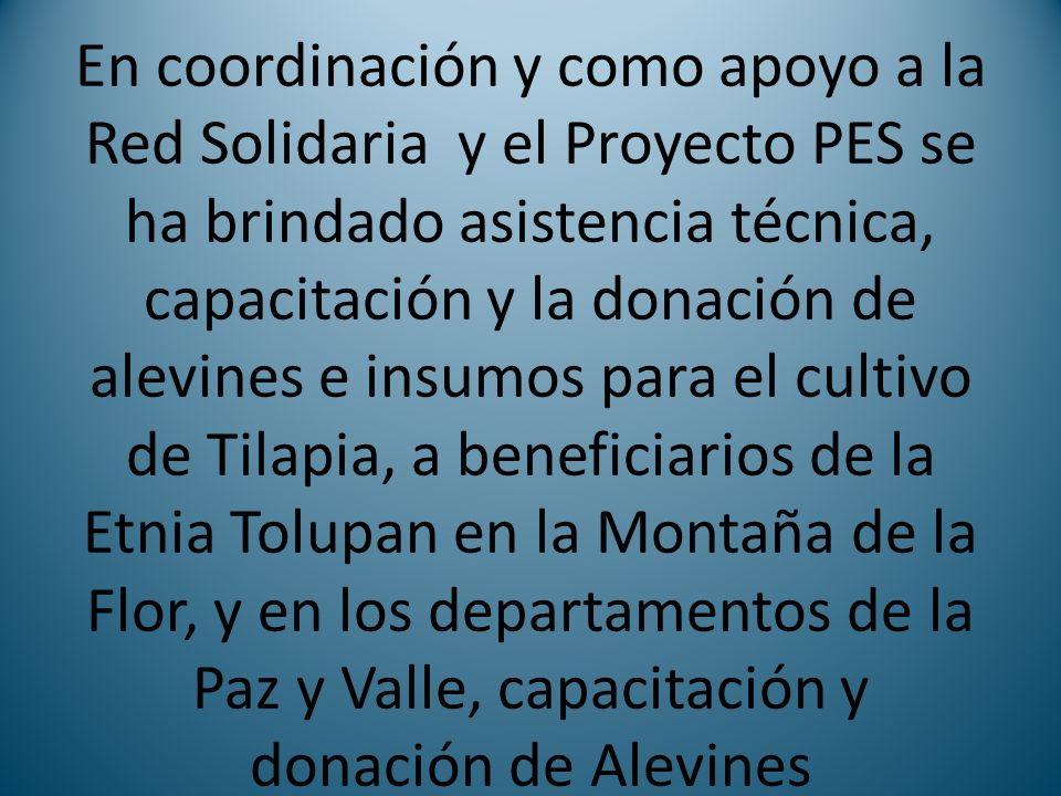 En coordinación y como apoyo a la Red Solidaria y el Proyecto PES se ha brindado asistencia técnica, capacitación y la donación de alevines e insumos para el cultivo de Tilapia, a beneficiarios de la Etnia Tolupan en la Montaña de la Flor, y en los departamentos de la Paz y Valle, capacitación y donación de Alevines