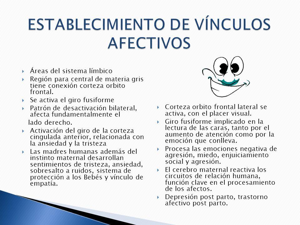 ESTABLECIMIENTO DE VÍNCULOS AFECTIVOS