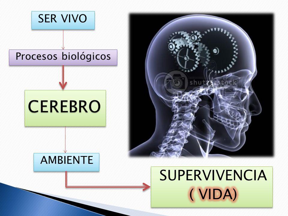 SER VIVO Procesos biológicos CEREBRO AMBIENTE SUPERVIVENCIA ( VIDA)