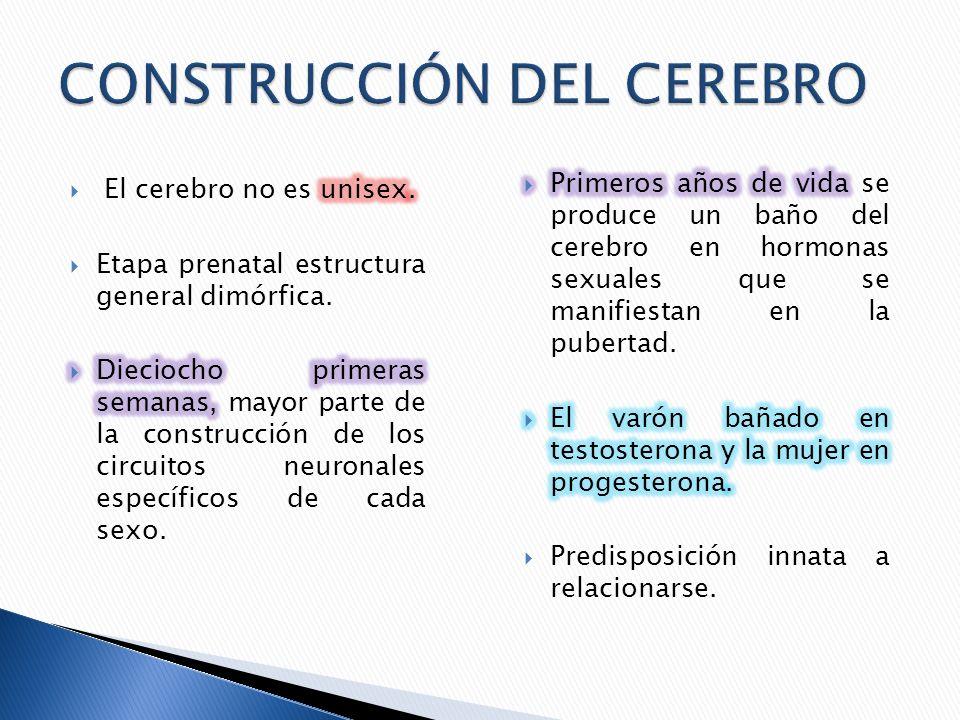 CONSTRUCCIÓN DEL CEREBRO
