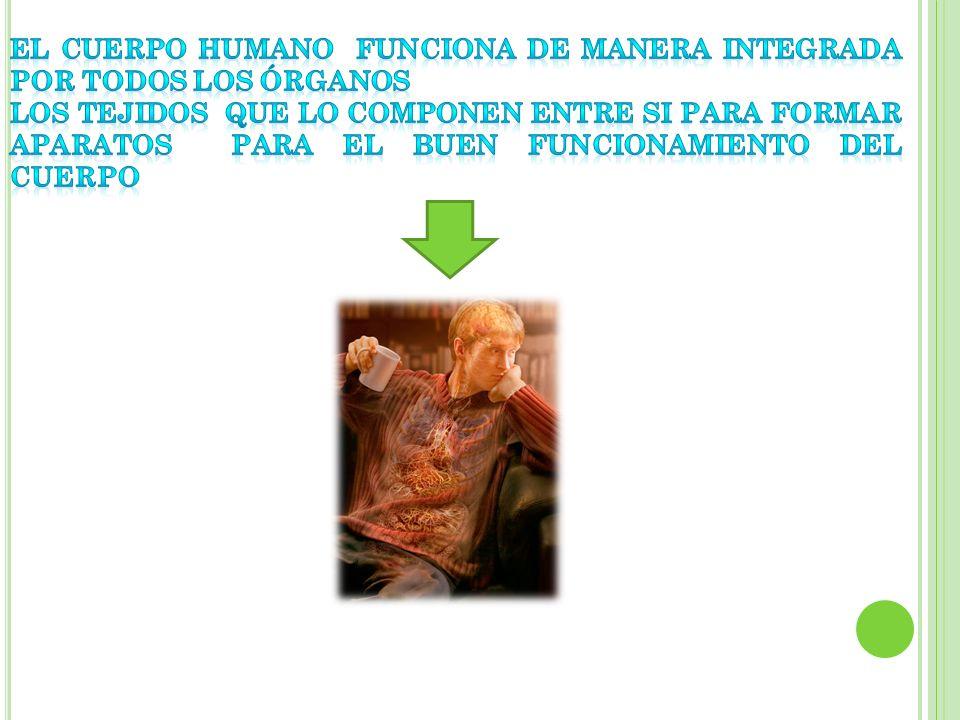 El cuerpo humano funciona de manera integrada por todos los órganos