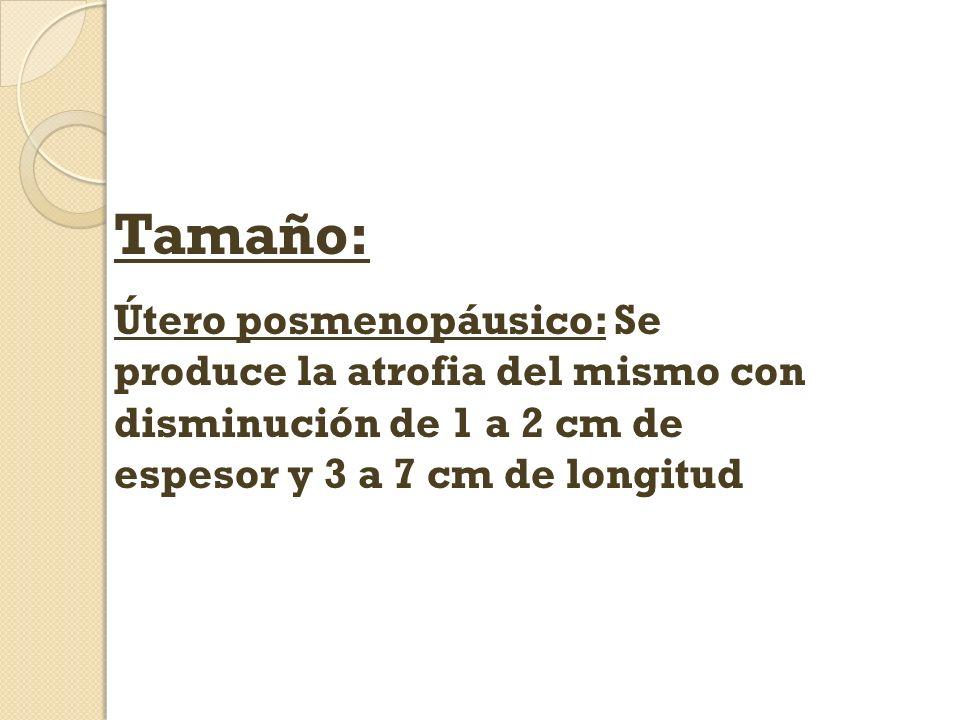Tamaño: Útero posmenopáusico: Se produce la atrofia del mismo con disminución de 1 a 2 cm de espesor y 3 a 7 cm de longitud.