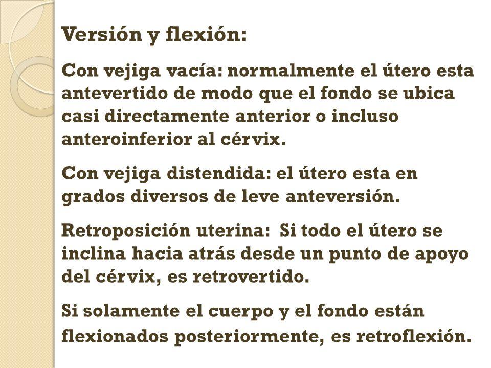 Versión y flexión: