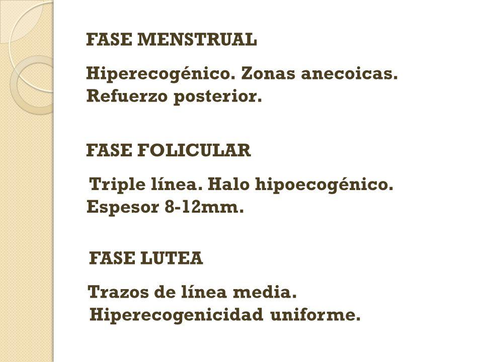 FASE MENSTRUAL Hiperecogénico. Zonas anecoicas. Refuerzo posterior. FASE FOLICULAR. Triple línea. Halo hipoecogénico. Espesor 8-12mm.