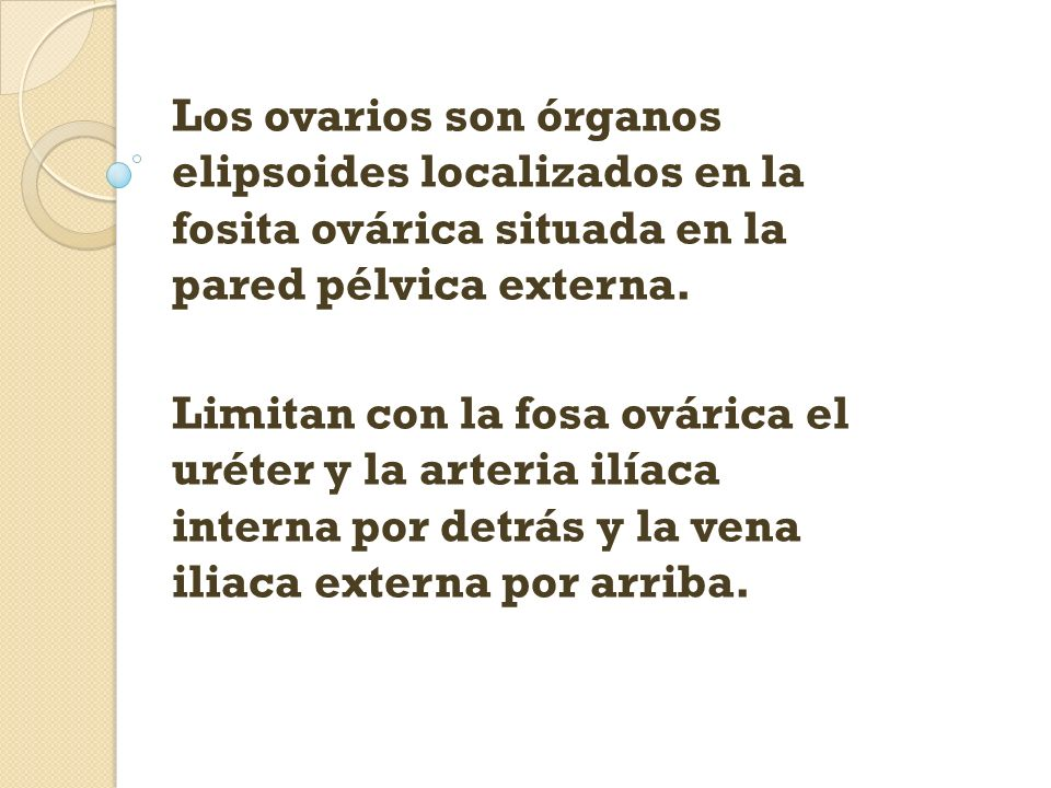Los ovarios son órganos elipsoides localizados en la fosita ovárica situada en la pared pélvica externa.