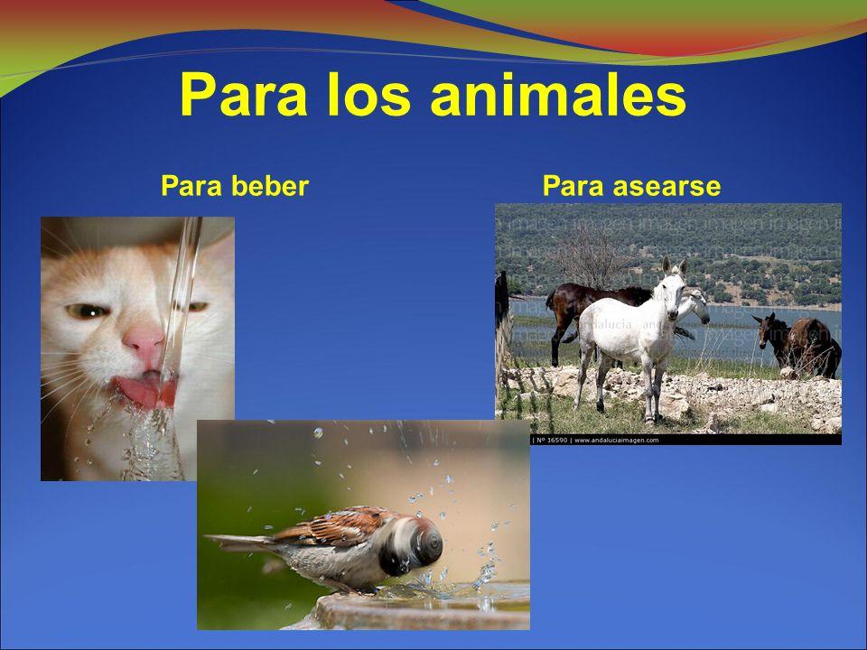 Para los animales Para beber Para asearse