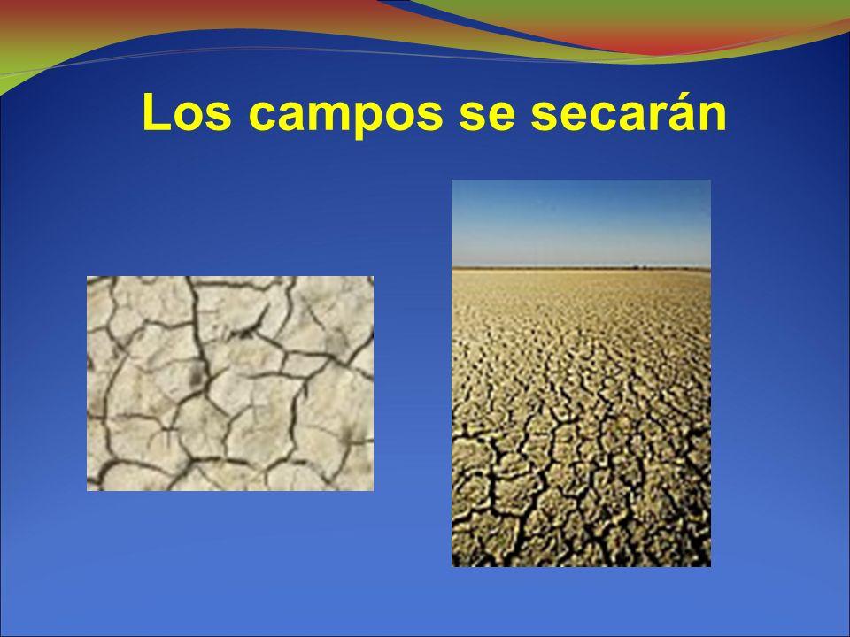 Los campos se secarán
