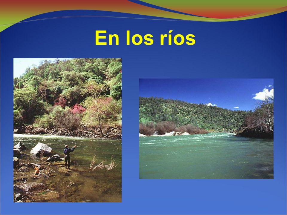 En los ríos 7