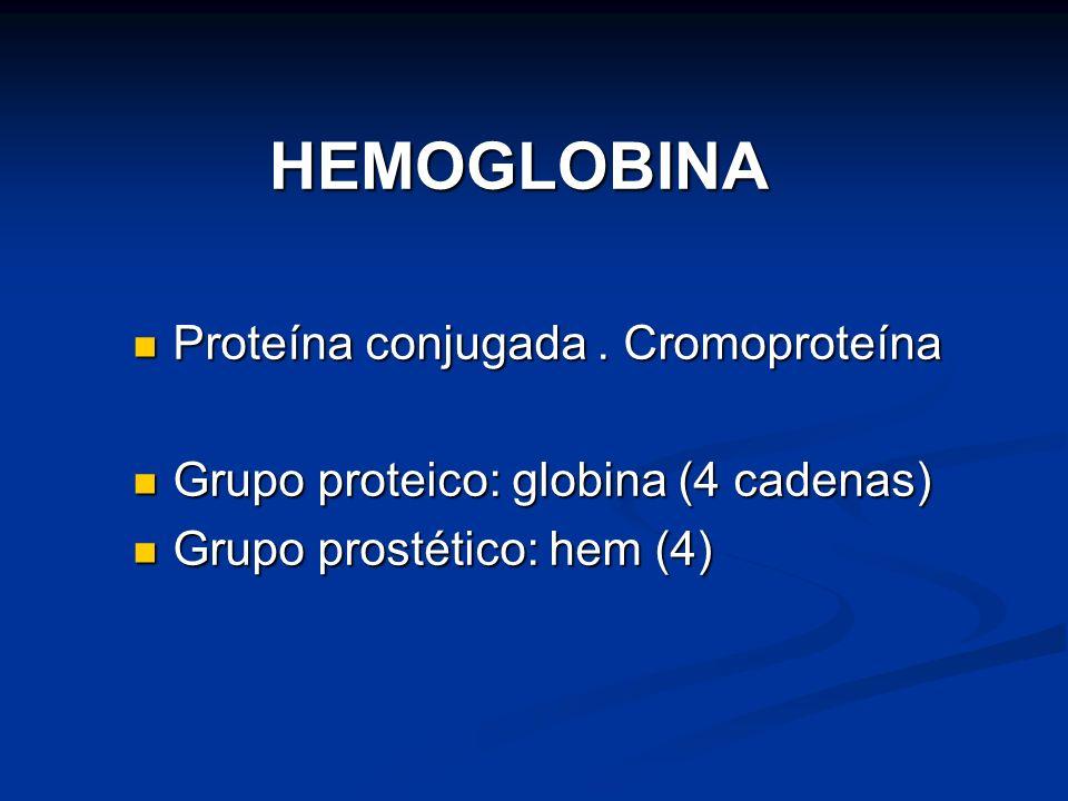 HEMOGLOBINA Proteína conjugada . Cromoproteína