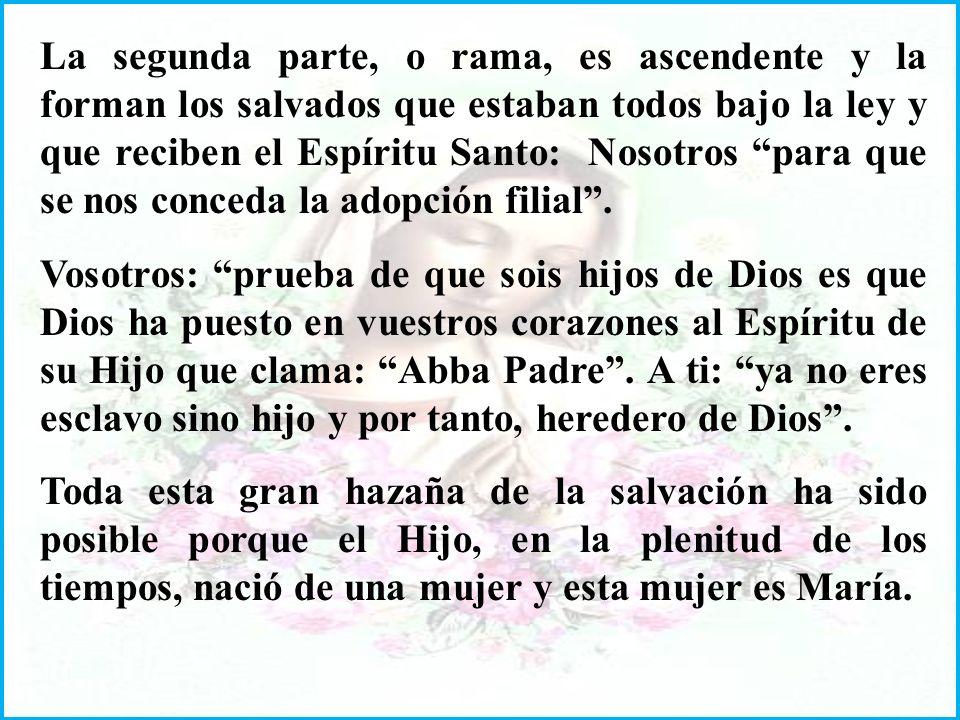 La segunda parte, o rama, es ascendente y la forman los salvados que estaban todos bajo la ley y que reciben el Espíritu Santo: Nosotros para que se nos conceda la adopción filial .