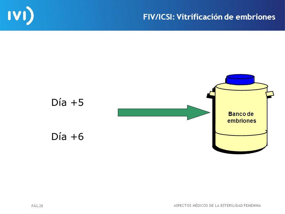 Día +5 Día +6 FIV/ICSI: Vitrificación de embriones Banco de embriones
