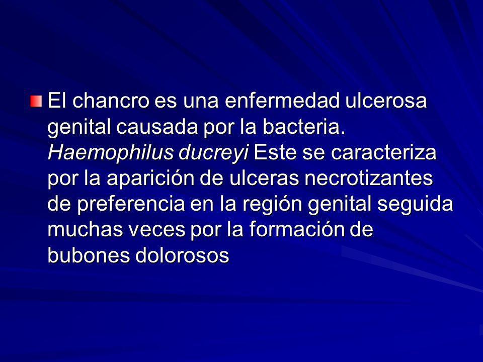 El chancro es una enfermedad ulcerosa genital causada por la bacteria
