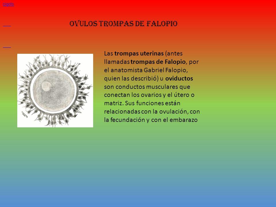 OVULOS TROMPAS DE FALOPIO