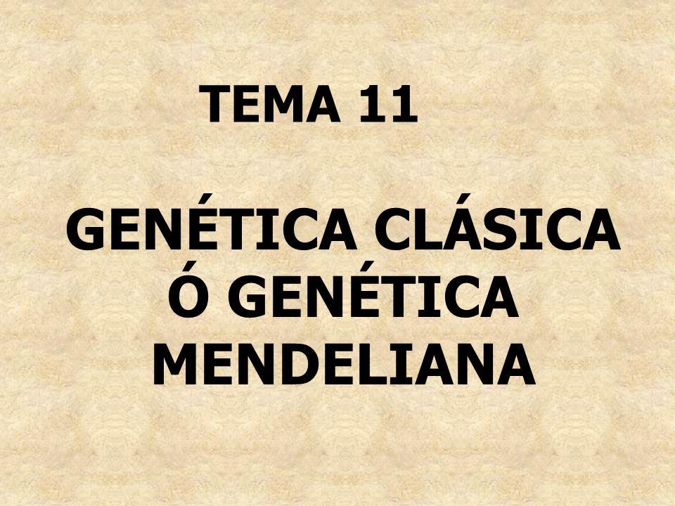 GENÉTICA CLÁSICA Ó GENÉTICA MENDELIANA