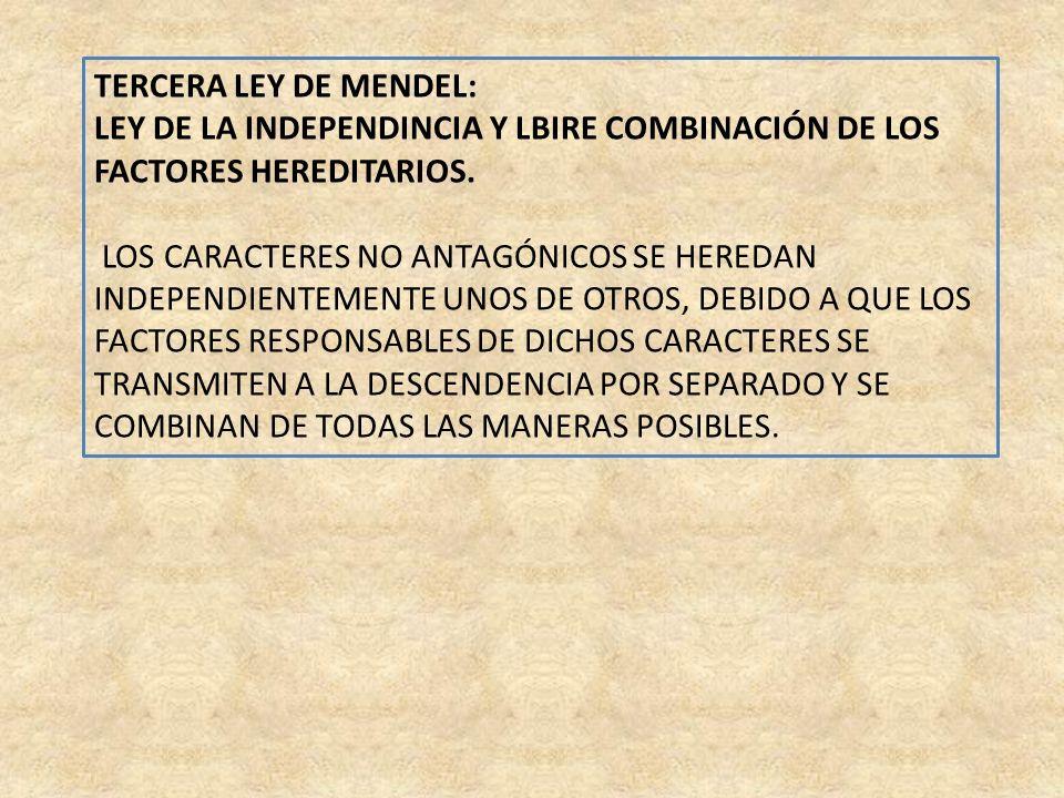 TERCERA LEY DE MENDEL: LEY DE LA INDEPENDINCIA Y LBIRE COMBINACIÓN DE LOS FACTORES HEREDITARIOS.