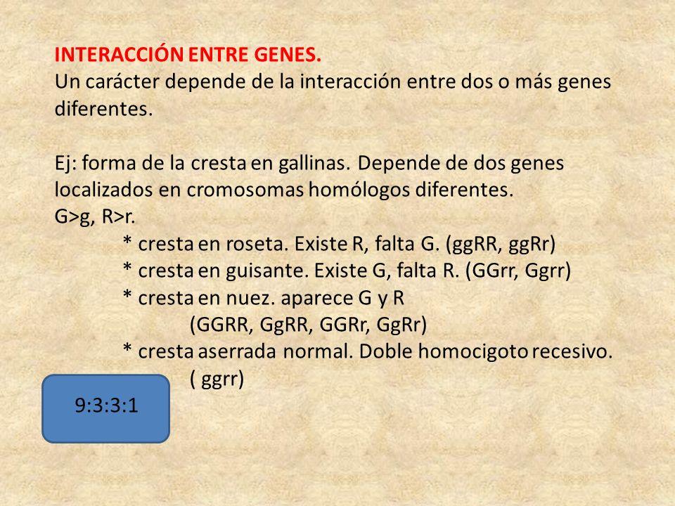 INTERACCIÓN ENTRE GENES.