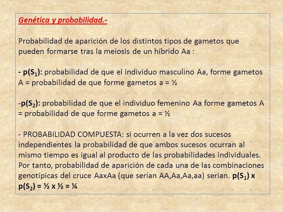 Genética y probabilidad.-