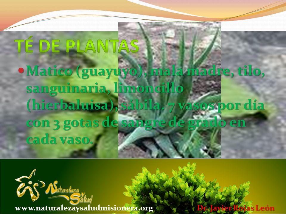 Té de plantas