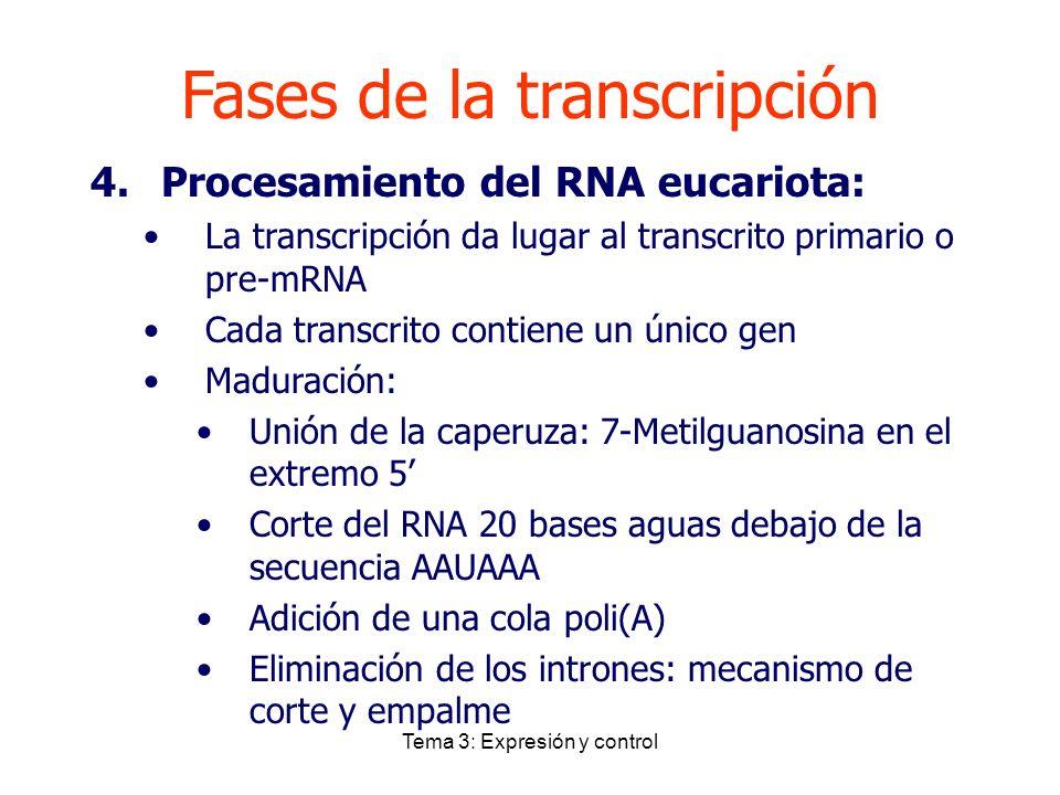 Fases de la transcripción