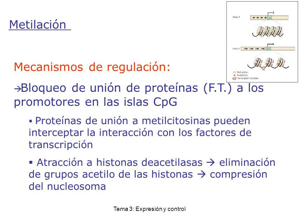 Tema 3: Expresión y control