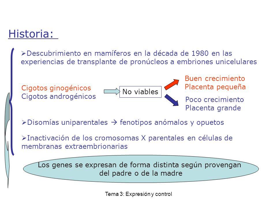 Historia: Descubrimiento en mamíferos en la década de 1980 en las experiencias de transplante de pronúcleos a embriones unicelulares.
