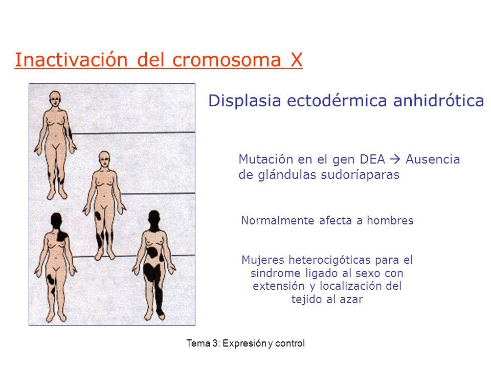 Inactivación del cromosoma X