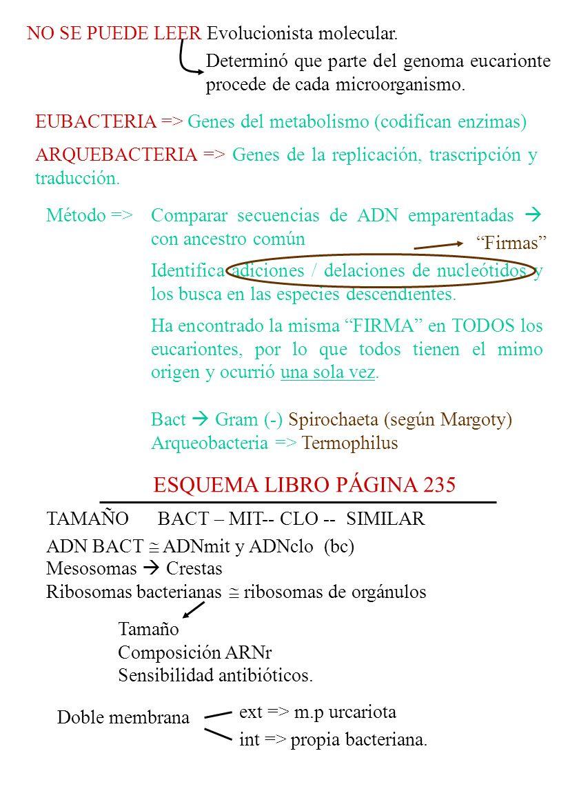 ESQUEMA LIBRO PÁGINA 235 NO SE PUEDE LEER Evolucionista molecular.