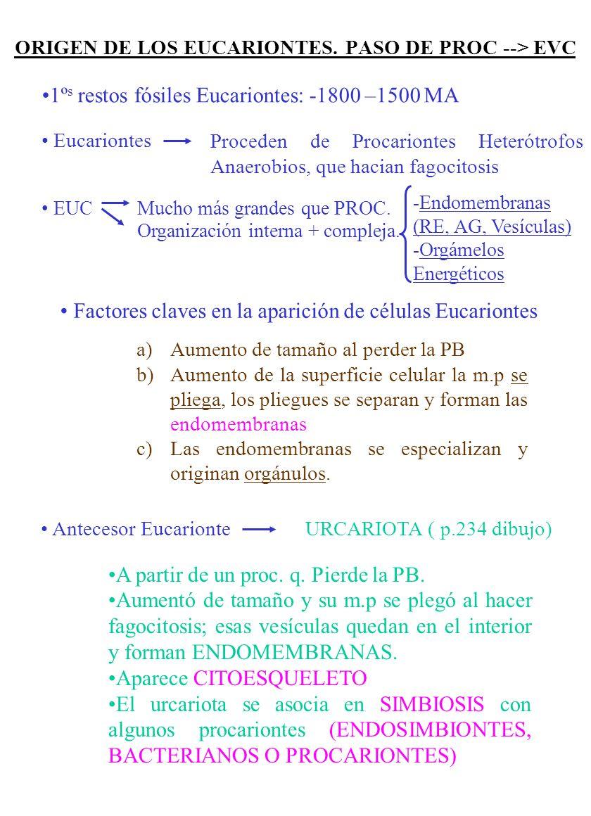 ORIGEN DE LOS EUCARIONTES. PASO DE PROC --> EVC