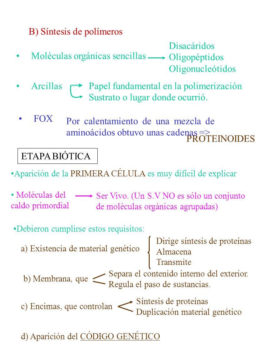 B) Síntesis de polímeros